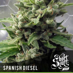 Auto Spanish Diesel - SHORT STUFF SEEDBANK