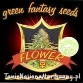 Auto Flower - GREEN FANTASY SEEDS