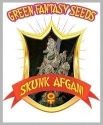 Skunk Afghani - GREEN FANTASY SEEDS