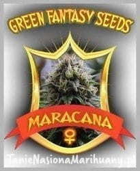 Maracana - GREEN FANTASY SEEDS
