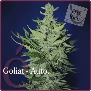 Goliat Auto - ELITE SEEDS
