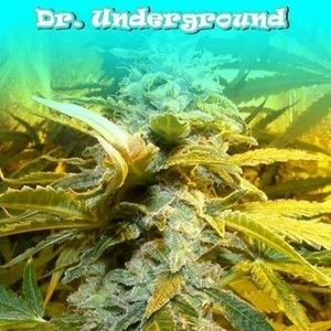 King Kong - DR UNDERGROUND