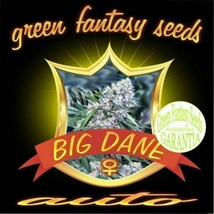 Auto Big Dane - GREEN FANTASY SEEDS