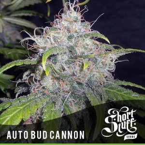Auto Bud Cannon - SHORT STUFF SEEDBANK