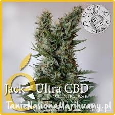 Jack Ultra CBD - ELITE SEEDS