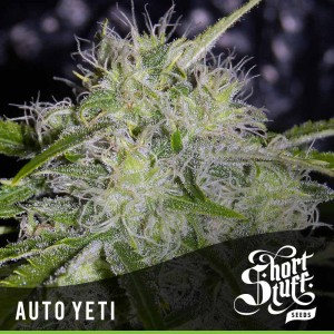 Auto Yeti - SHORT STUFF SEEDBANK