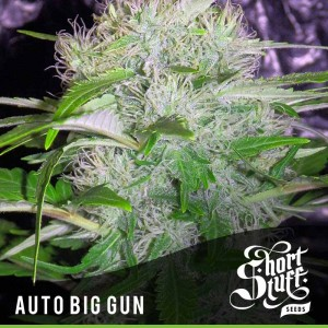 Auto Big Gun - SHORT STUFF SEEDBANK