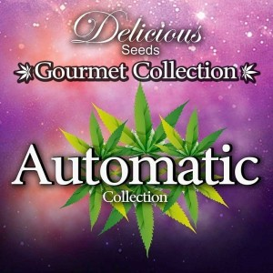 Gourmet Collection Automatic 2 - DELICIOUS SEEDS