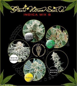 Indica Mix G - GREEN HOUSE SEEDS