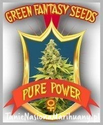 Pure Power - GREEN FANTASY SEEDS