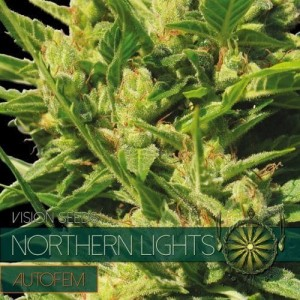 Northern Lights Auto - Vision Seeds