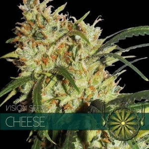 Cheese - Vision Seeds