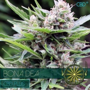 Bone Dea CBD+ - Vision Seeds