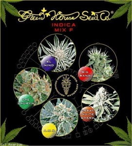 Indica Mix F - GREEN HOUSE SEEDS