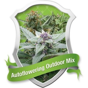 Autoflowering Outdoor Mix® - ROYAL QUEEN SEEDS