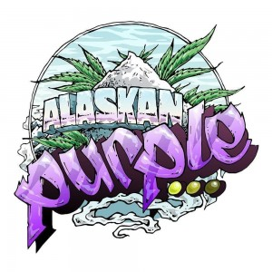 Alaskan Purple - SEEDSMAN