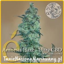 Amnesia Haze Ultra CBD - ELITE SEEDS